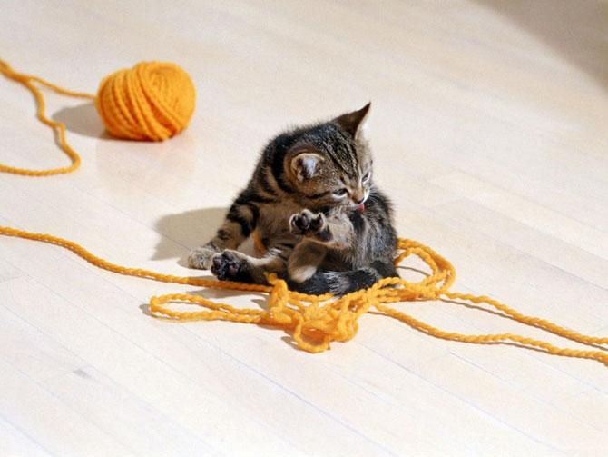 عکسهای زیبا و دوست داشتنی از گربه های ناز