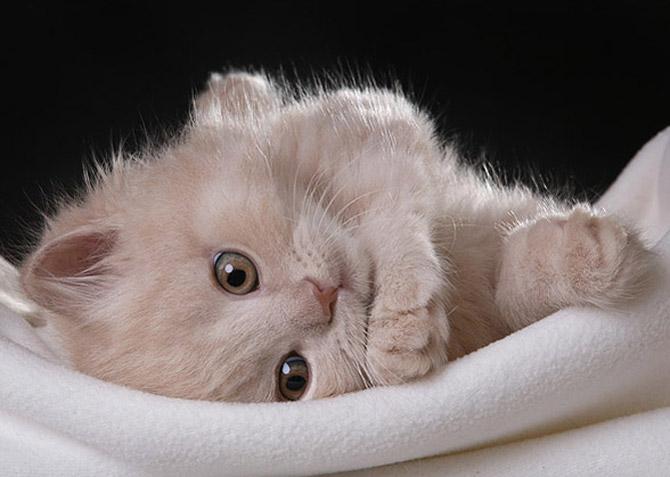 جفت گیری زن عکسهای دوست داشتنی از گربه های ناز