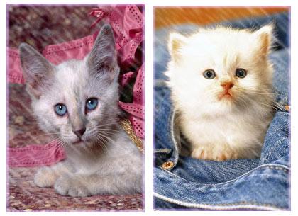 عکسهای زیبا و دوست داشتنی از گربه های ناز| ariapix.net