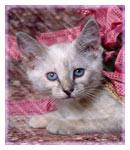 عکسهای دوست داشتنی از گربه های ناز